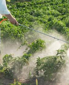Nutritie - Ce trebuie sa stim despre pesticide