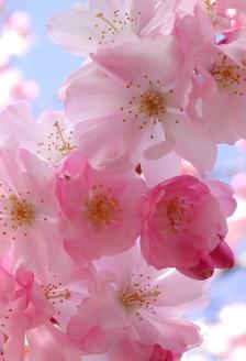 Wellness - Flori care te inspira. Invata de la ele!